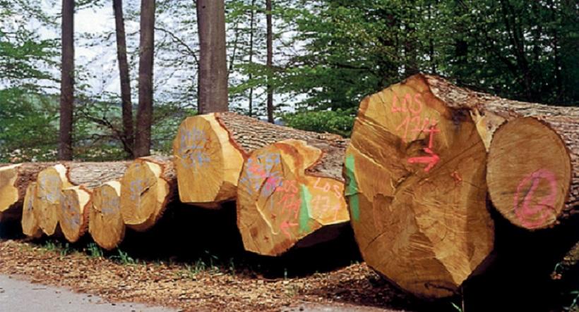 Мебель из натурального дерева в СПБ